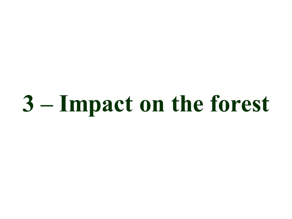 3 – Impact on the forest