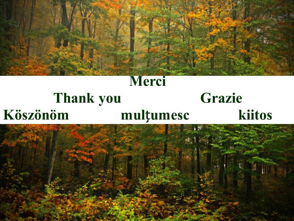 Merci Thank youGrazie Köszönömmulumesckiitos