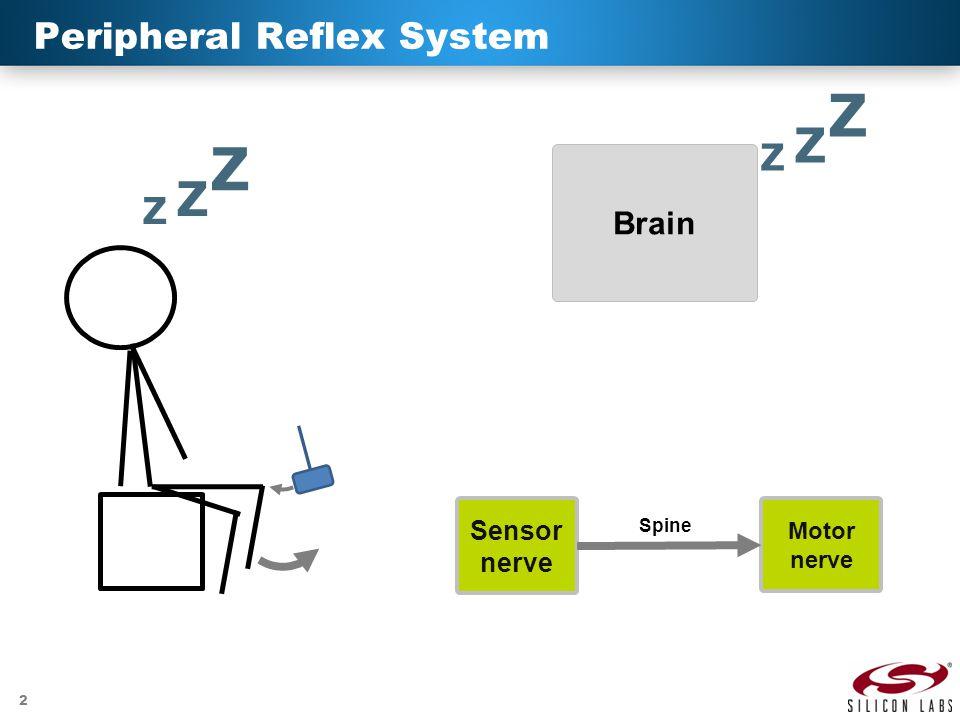 2 Peripheral Reflex System Brain Z Z Z Z Z Z Motor nerve Sensor nerve Spine