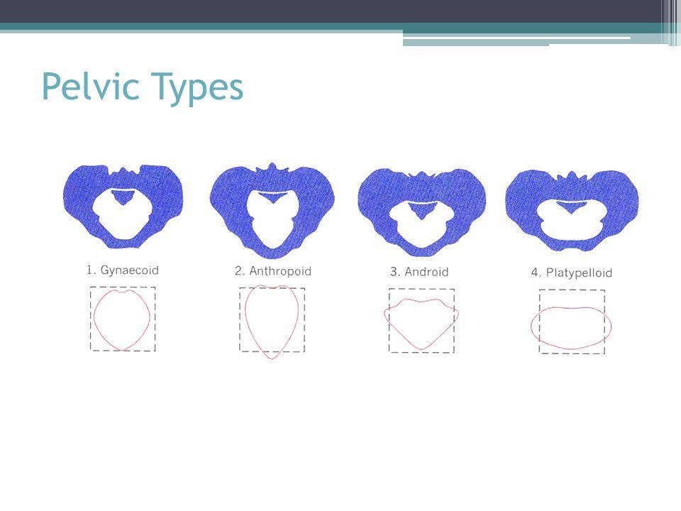 Pelvic Types