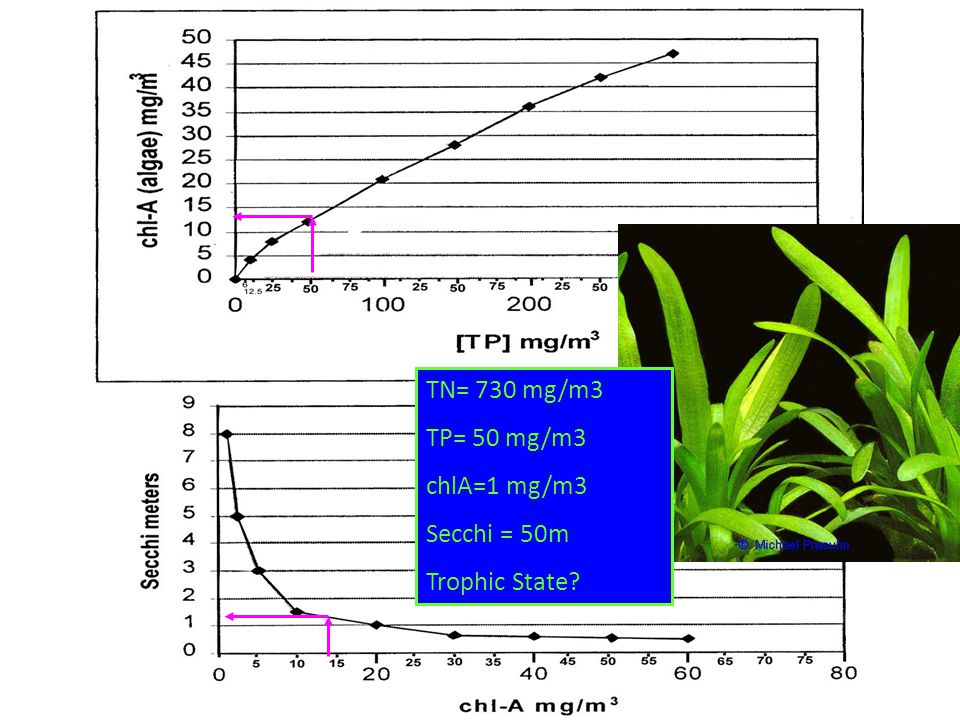 TN= 730 mg/m3 TP= 50 mg/m3 chlA=1 mg/m3 Secchi = 50m Trophic State?