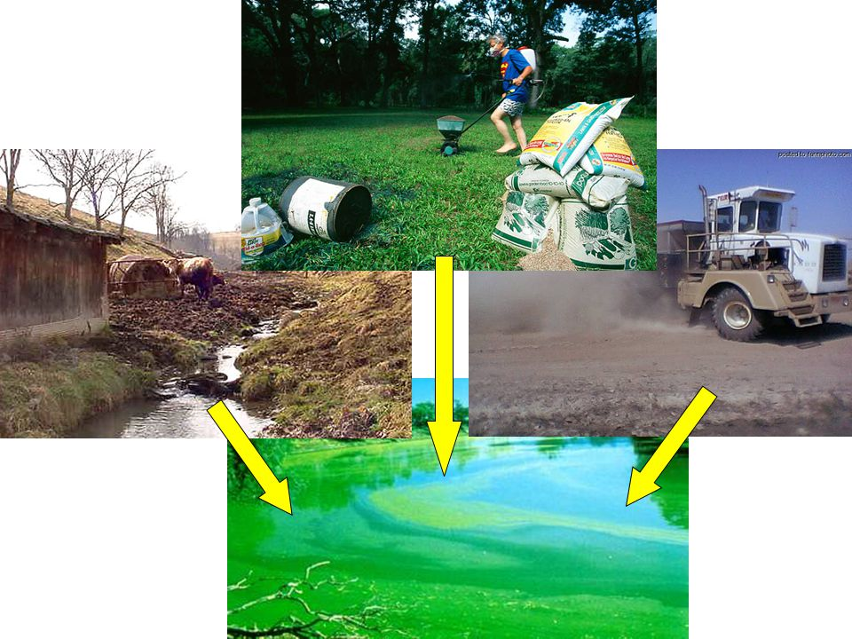 2.What is the TP load to the Gator Lake with total forest cover.