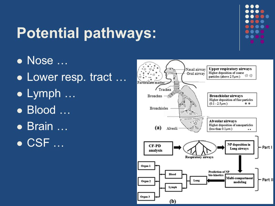 Potential pathways: Nose … Lower resp. tract … Lymph … Blood … Brain … CSF …