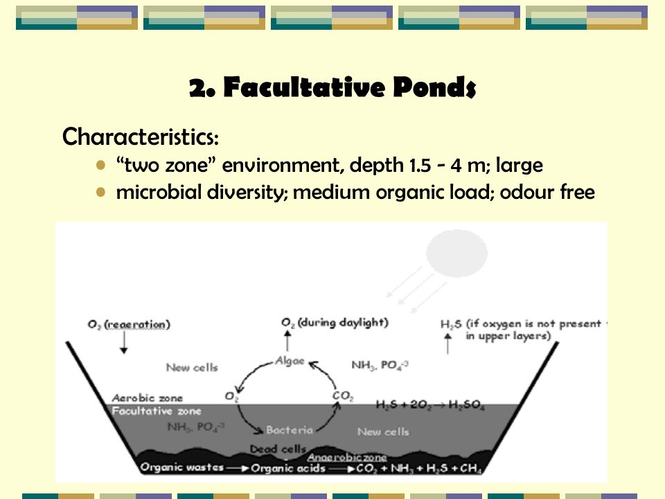 "2. Facultative Ponds Characteristics: ""two zone"" environment, depth 1.5 - 4 m; large microbial diversity; medium organic load; odour free"