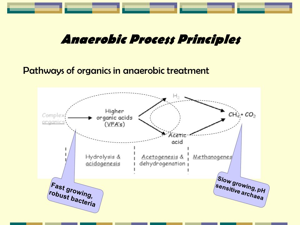 Anaerobic Process Principles Pathways of organics in anaerobic treatment Fast growing, robust bacteria Slow growing, pH sensitive archaea