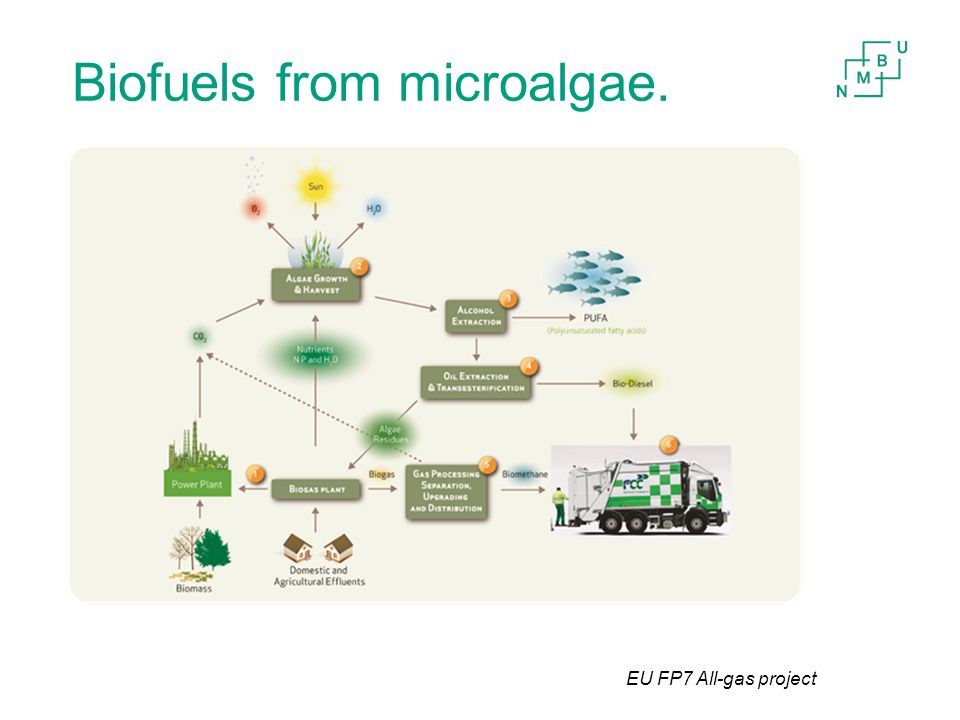 Biofuels from microalgae. EU FP7 All-gas project