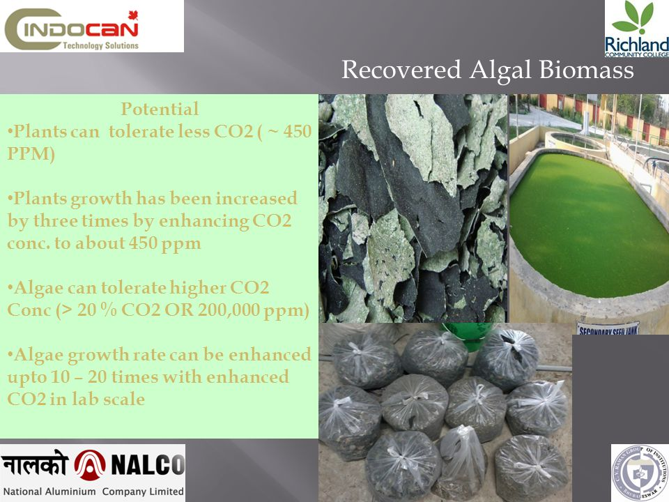 Recovered Algal Biomass Potential Plants can tolerate less CO2 ( ~ 450 PPM) Plants growth has been increased by three times by enhancing CO2 conc. to