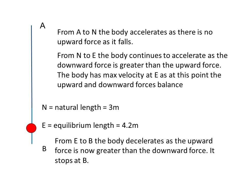 N = natural length = 3m A E = equilibrium length = 4.2m From E to B the body decelerates as the upward force is now greater than the downward force. I