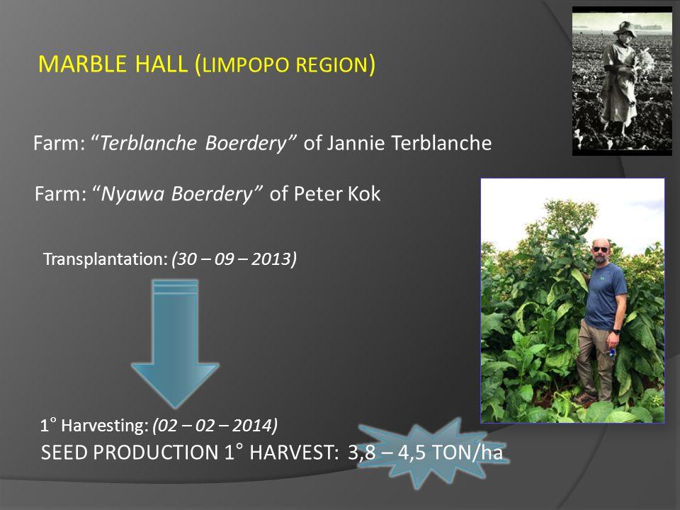 "MARBLE HALL ( LIMPOPO REGION ) Farm: ""Terblanche Boerdery"" of Jannie Terblanche Farm: ""Nyawa Boerdery"" of Peter Kok Transplantation: (30 – 09 – 2013)"