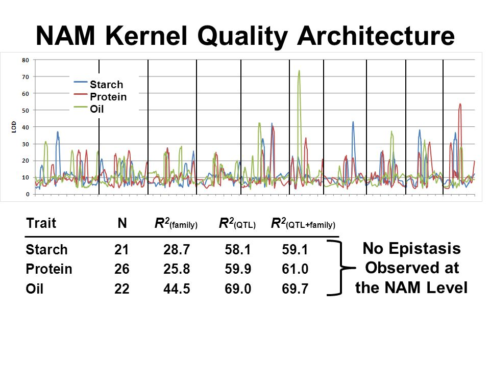 NAM Kernel Quality Architecture TraitNR 2 (family) R 2 (QTL) R 2 (QTL+family) Starch 2128.758.159.1 Protein 2625.859.961.0 Oil 2244.569.069.7 Starch Protein Oil No Epistasis Observed at the NAM Level