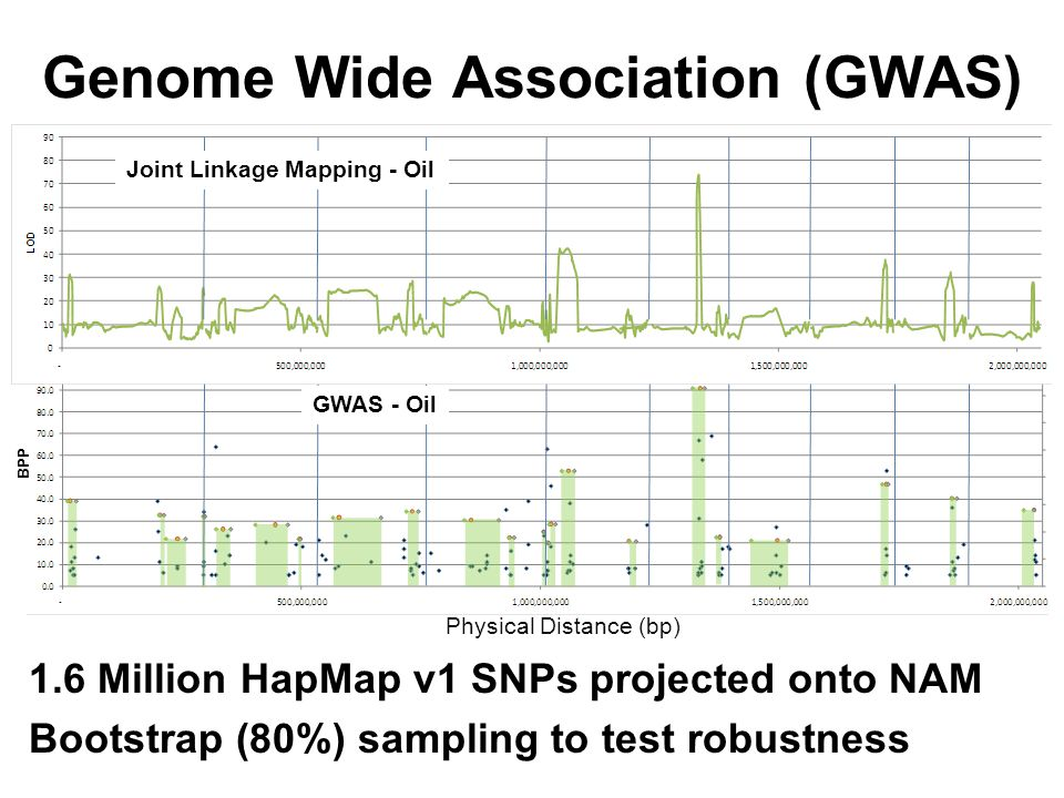 Genome Wide Association (GWAS) 1.6 Million HapMap v1 SNPs projected onto NAM Bootstrap (80%) sampling to test robustness Physical Distance (bp) GWAS - Oil BPP Joint Linkage Mapping - Oil