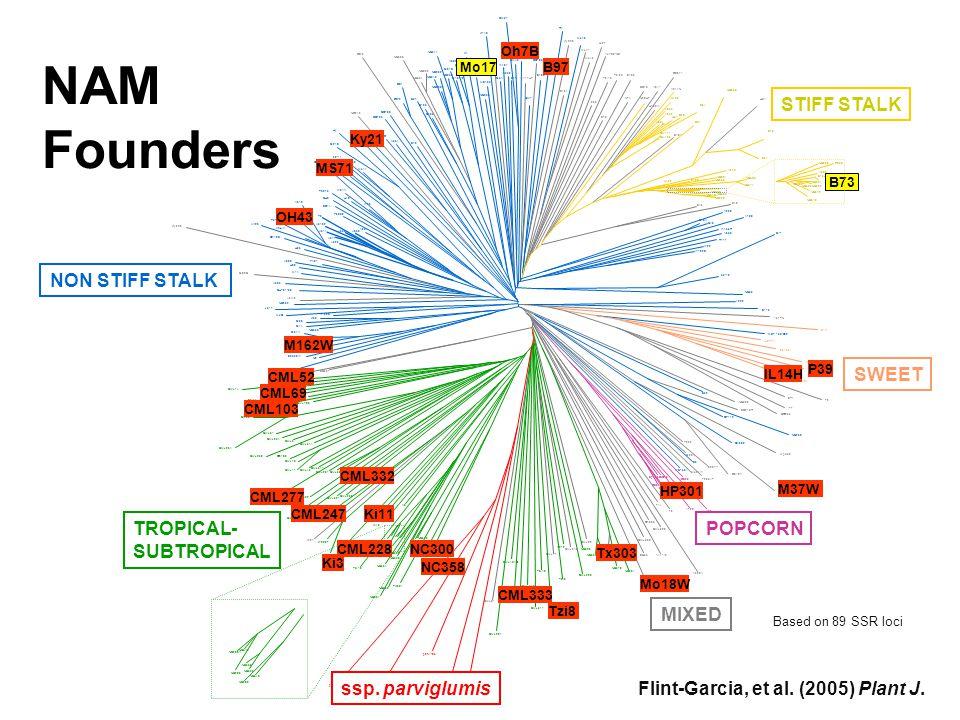 NAM Founders P39 M37W CML277 B97 CML103 CML69 CML52 CML228 CML247 CML332 IL14H Ky21 Ki11 Ki3 MS71 Mo18W Oh7B M162W Tx303 Tzi8 CML333 NC358 NC300 HP301 OH43