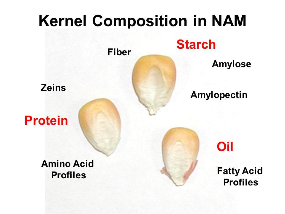 Kernel Composition in NAM Starch Amylose Amylopectin Fiber Oil Fatty Acid Profiles Protein Zeins Amino Acid Profiles