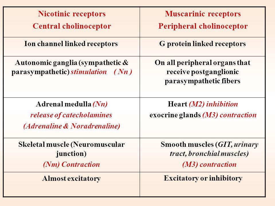 Pharmacological actionsLocationsReceptor CNS excitation Gastric acid secretion CNS gastric parietal cells M1 (Neural) Excitatory Cardiac inhibitionHea