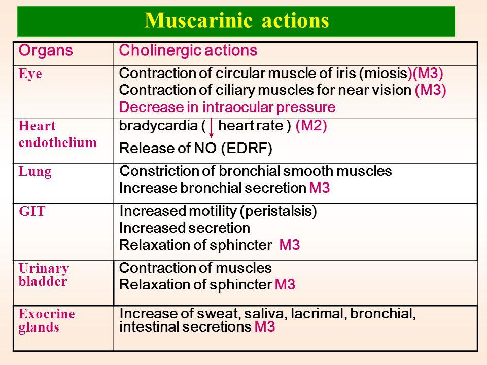 Skeletal muscles: Low conc.  muscle contraction High conc.  persistent depolarization & paralysis. Ganglia: stimulation of sympathetic& parasympathe