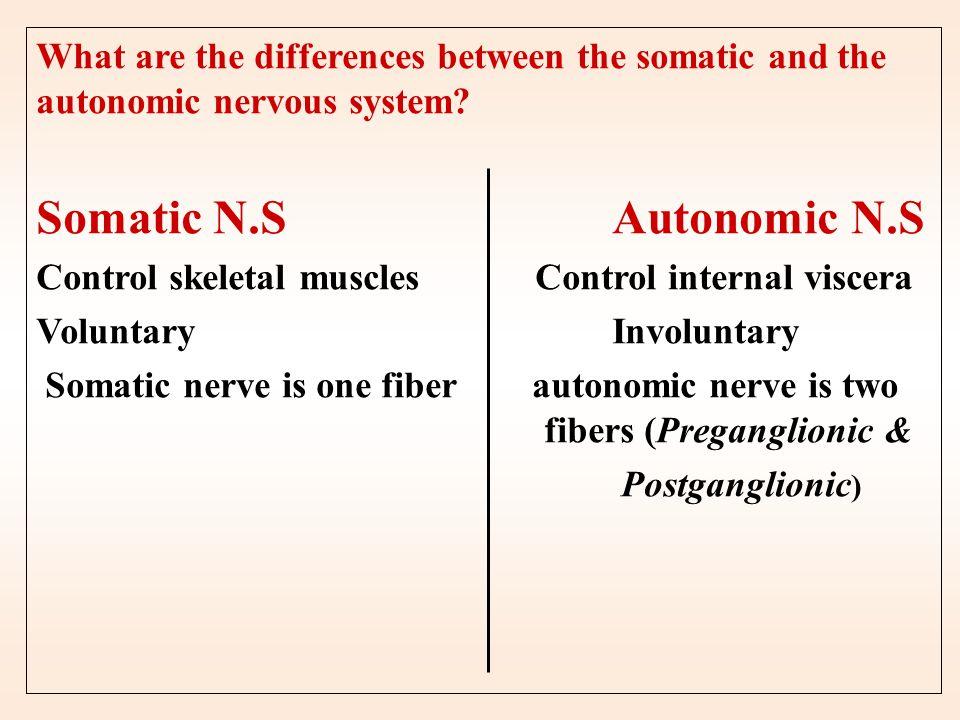 Nervous system Peripheral nervous system Central nervous system Efferent Division Afferent Division Autonomic nervous system Somatic system Enteric ne