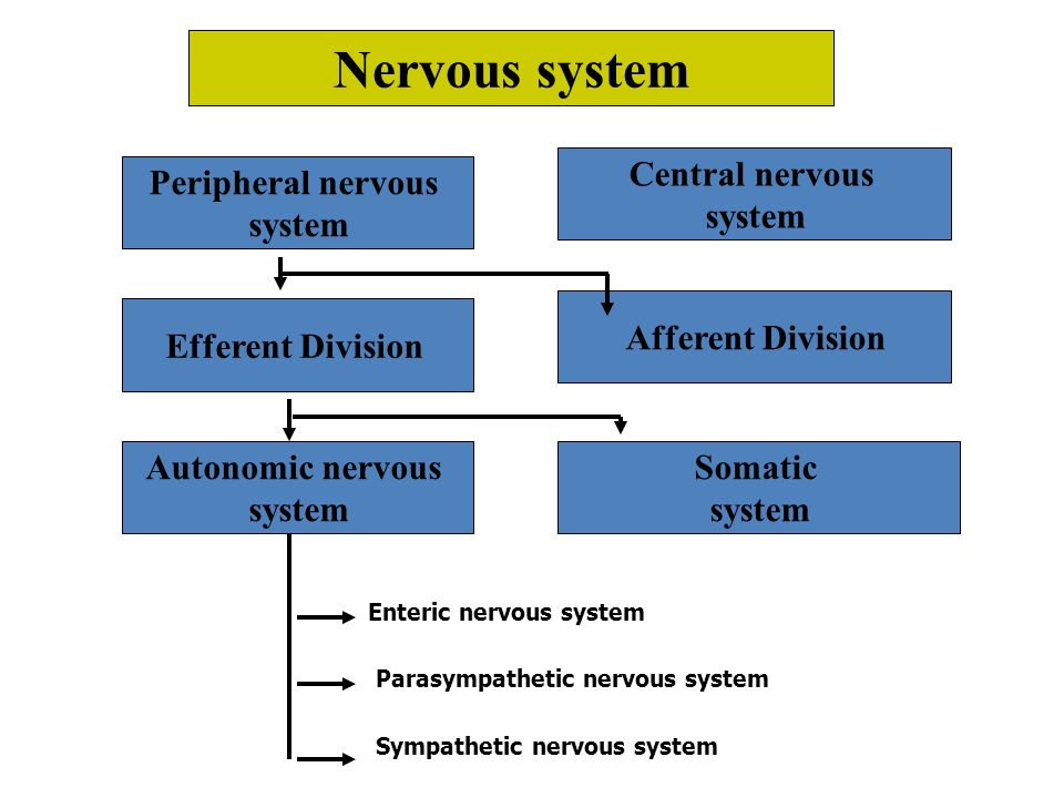 By the end of this lecture the student should know Classification of nervous system.
