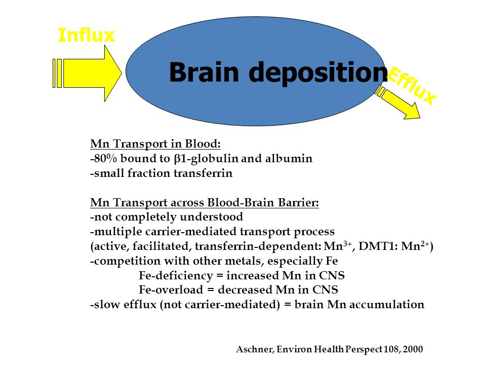 Brain deposition Influx Efflux Mn Transport in Blood: -80% bound to  1-globulin and albumin -small fraction transferrin Mn Transport across Blood-Brain Barrier: -not completely understood -multiple carrier-mediated transport process (active, facilitated, transferrin-dependent: Mn 3+, DMT1: Mn 2+ ) -competition with other metals, especially Fe Fe-deficiency = increased Mn in CNS Fe-overload = decreased Mn in CNS -slow efflux (not carrier-mediated) = brain Mn accumulation Aschner, Environ Health Perspect 108, 2000