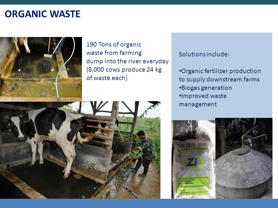 ORGANIC WASTE 190 Tons of organic waste from farming dump into the river everyday (8,000 cows produce 24 kg of waste each) Solutions include: Organic