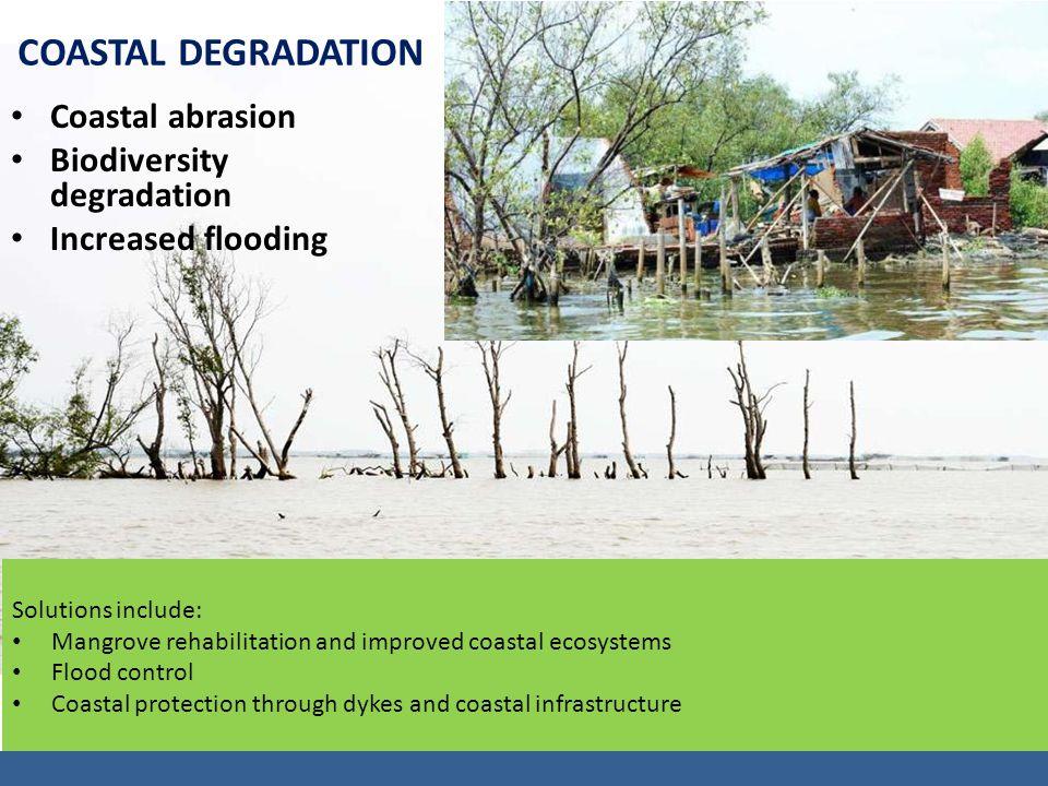 Coastal abrasion Biodiversity degradation Increased flooding Solutions include: Mangrove rehabilitation and improved coastal ecosystems Flood control