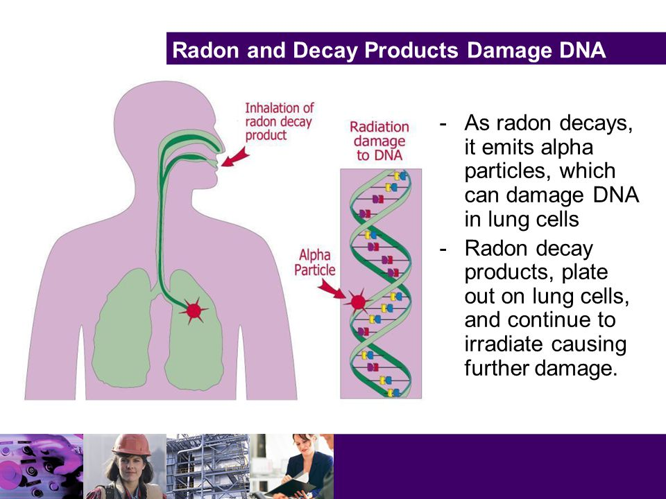 -As radon decays, it emits alpha particles, which can damage DNA in lung cells -Radon decay products, plate out on lung cells, and continue to irradiate causing further damage.