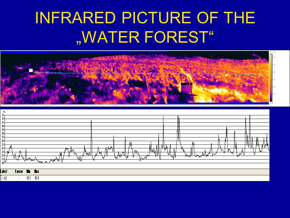 """INFRARED PICTURE OF THE """"WATER FOREST"""