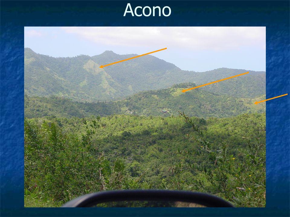 Acono