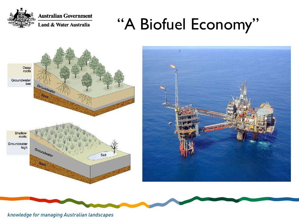 A Biofuel Economy