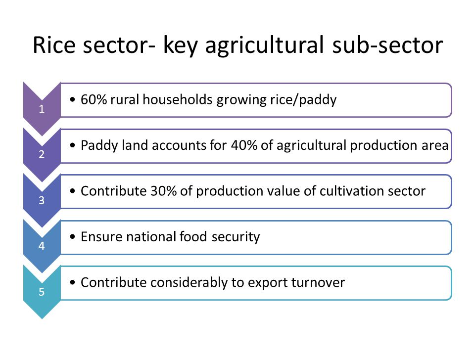 Rice sector- key agricultural sub-sector 1 60% rural households growing rice/paddy 2 P a d d y la n d a c c o u n ts fo r 4 0 % o f a gr ic ul t u ra l p r o d u ct io n ar e a 3 Contribute 30% of production value of cultivation sector 4 Ensure national food security 5 Contribute considerably to export turnover