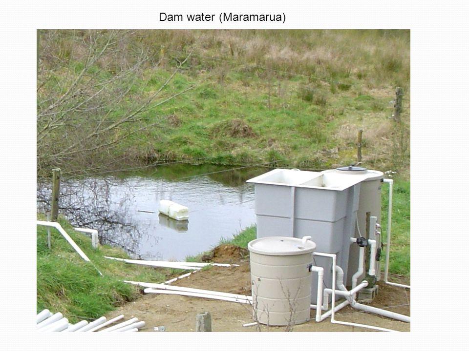 Dam water (Maramarua)