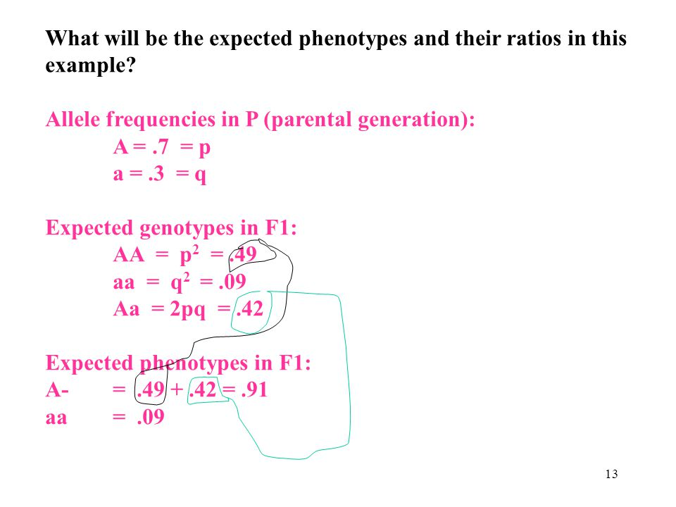 13 What will be the expected phenotypes and their ratios in this example? Allele frequencies in P (parental generation): A =.7 = p a =.3 = q Expected