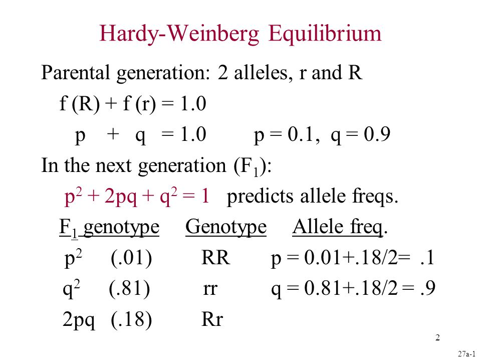 2 Hardy-Weinberg Equilibrium Parental generation: 2 alleles, r and R f (R) + f (r) = 1.0 p + q = 1.0 p = 0.1, q = 0.9 In the next generation (F 1 ): p