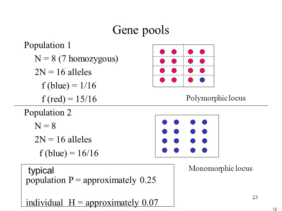 23 Gene pools Population 1 N = 8 (7 homozygous) 2N = 16 alleles f (blue) = 1/16 f (red) = 15/16 Population 2 N = 8 2N = 16 alleles f (blue) = 16/16 Polymorphic locus Monomorphic locus 5f population P = approximately 0.25 individual H = approximately 0.07 typical