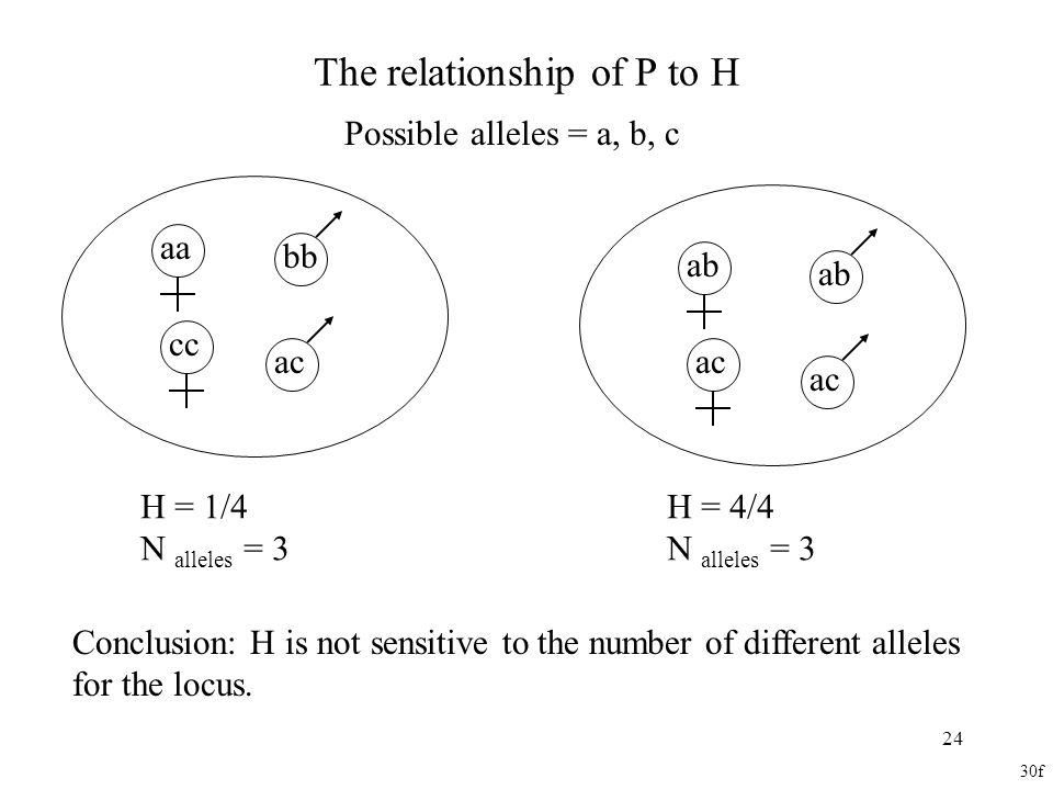 24 The relationship of P to H Possible alleles = a, b, c Conclusion: H is not sensitive to the number of different alleles for the locus. cc aa ac ab