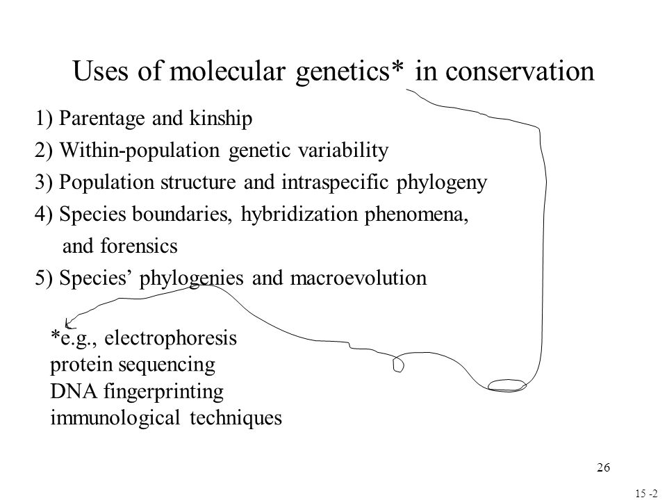 26 Uses of molecular genetics* in conservation 1) Parentage and kinship 2) Within-population genetic variability 3) Population structure and intraspecific phylogeny 4) Species boundaries, hybridization phenomena, and forensics 5) Species' phylogenies and macroevolution 15 -2 *e.g., electrophoresis protein sequencing DNA fingerprinting immunological techniques