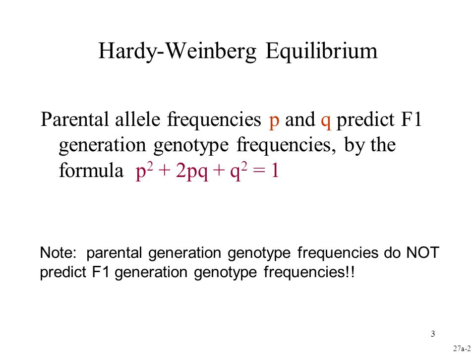 3 Hardy-Weinberg Equilibrium Parental allele frequencies p and q predict F1 generation genotype frequencies, by the formula p 2 + 2pq + q 2 = 1 27a-2
