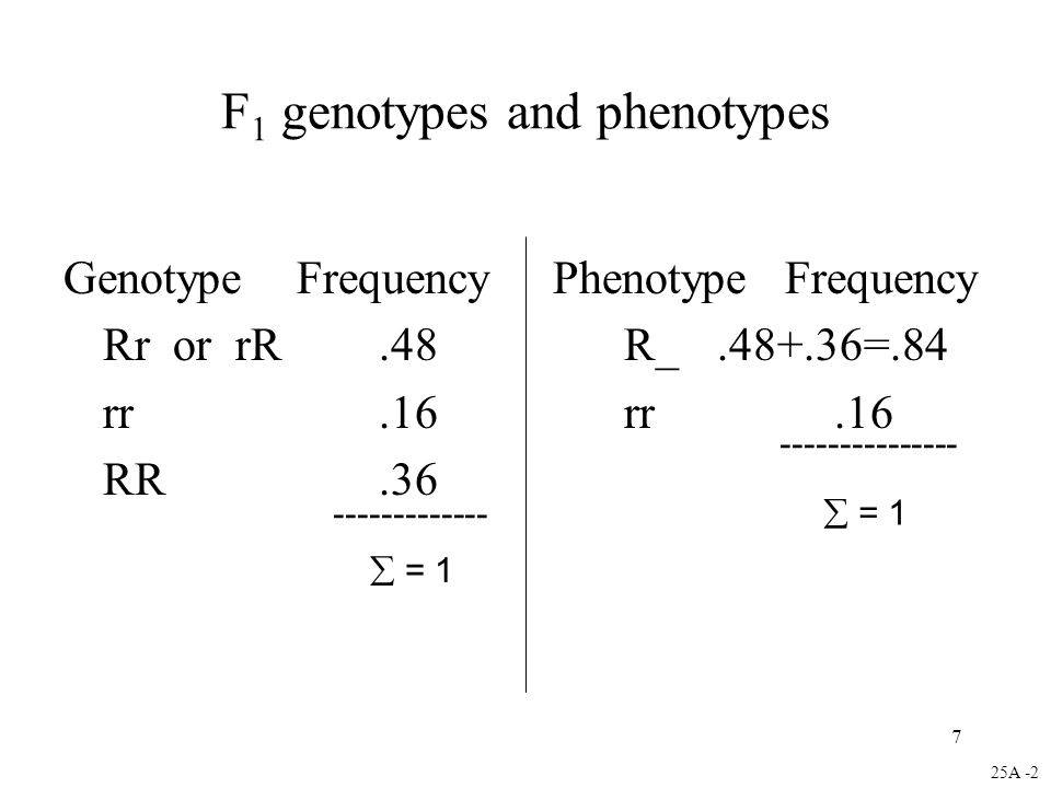 7 F 1 genotypes and phenotypes Genotype Frequency Phenotype Frequency Rr or rR.48 R_.48+.36=.84 rr.16 rr.16 RR.36 25A -2  = 1 ------------- ---------------