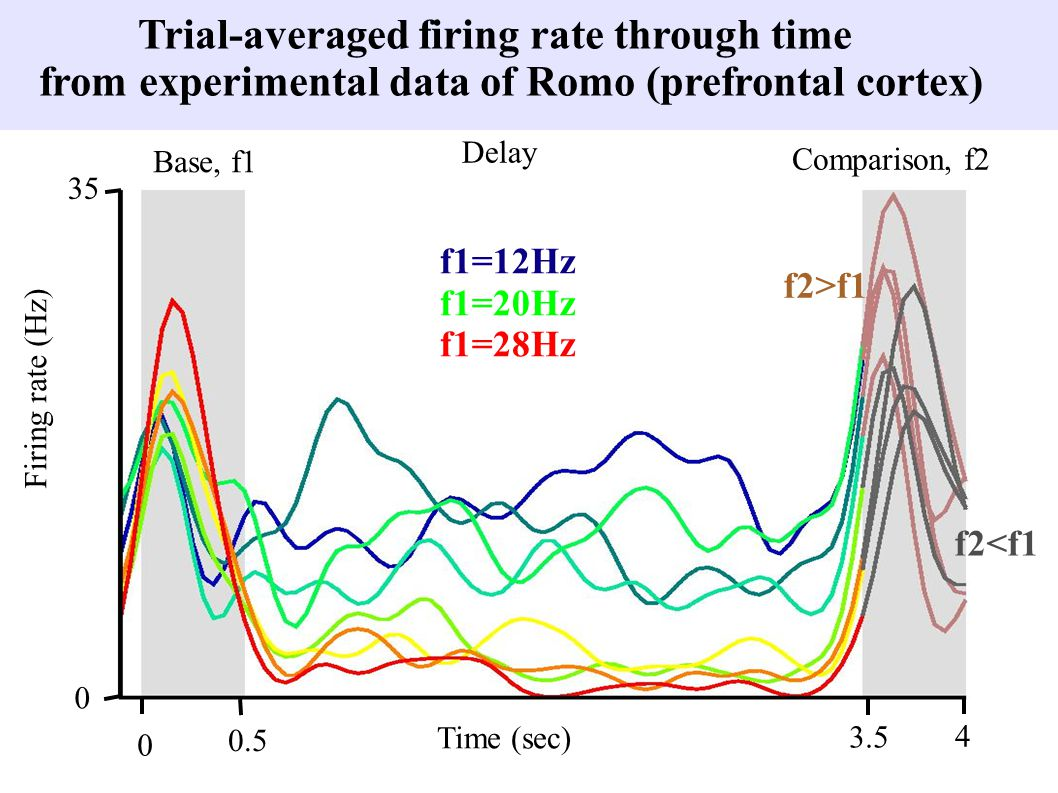 Trial-averaged firing rate through time from experimental data of Romo (prefrontal cortex) Base, f1 Delay Comparison, f2 Time (sec) 0 0.5 3.5 4 0 35 Firing rate (Hz) f2>f1 f2<f1 f1=12Hz f1=20Hz f1=28Hz