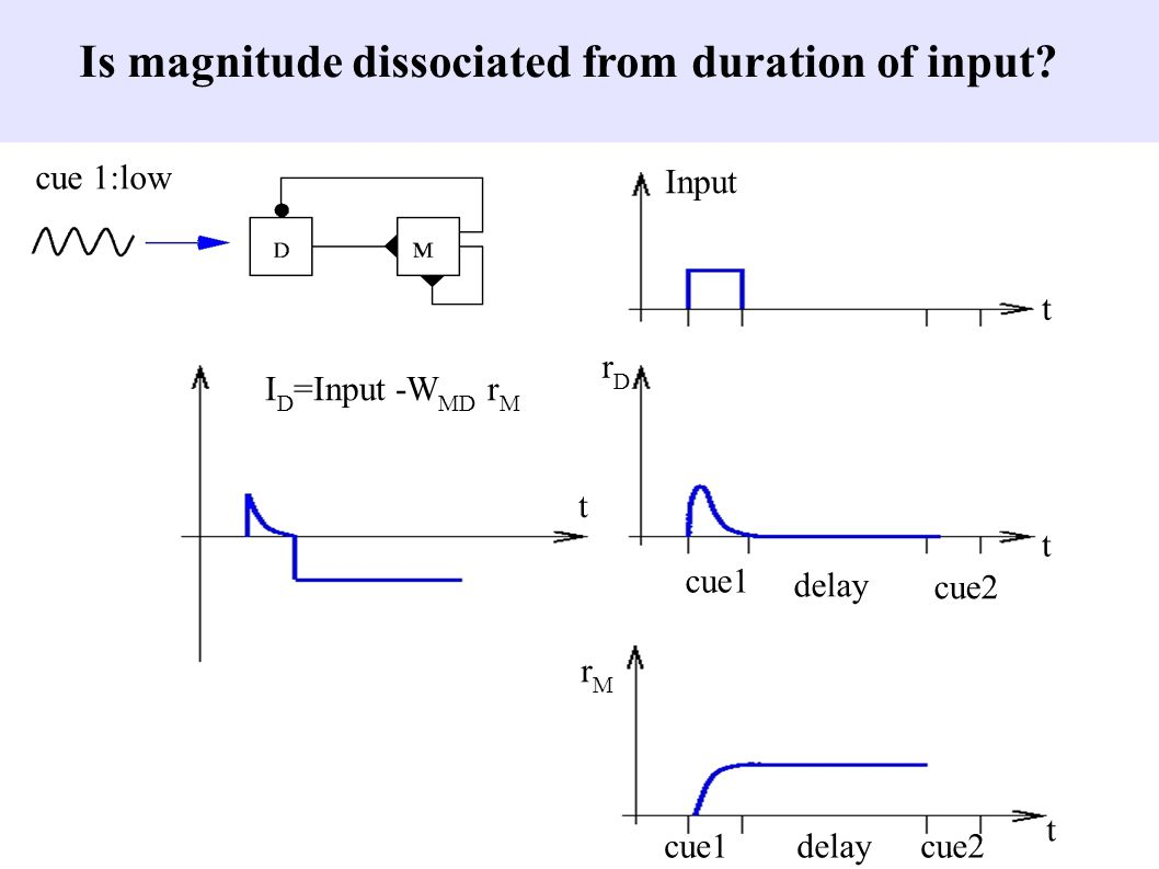 Input rDrD rMrM I D =Input -W MD r M t t t t cue1delaycue2 cue1 delay cue2 cue 1:low Is magnitude dissociated from duration of input