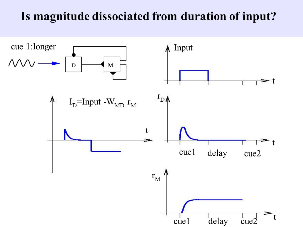 Input rDrD rMrM I D =Input -W MD r M t t t t cue1delaycue2 cue1 delay cue2 cue 1:longer Is magnitude dissociated from duration of input