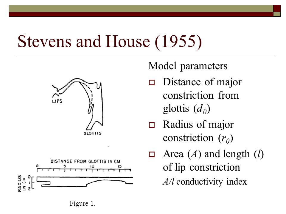 Stevens and House (1955) Model assumes  No coupling with Nasal cavity trachea & pulmonary system