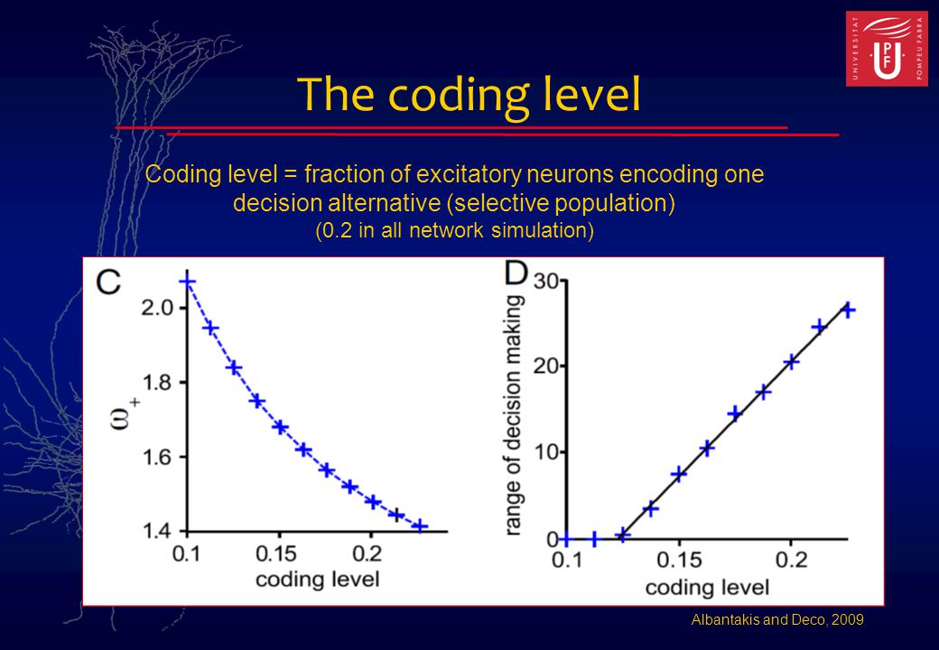 The coding level Albantakis and Deco, 2009 Coding level = fraction of excitatory neurons encoding one decision alternative (selective population) (0.2 in all network simulation)