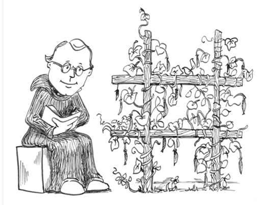 Mendel Modern genetics had its beginnings in an abbey garden, where a monk named Gregor Mendel documented a particular mechanism of inheritance.