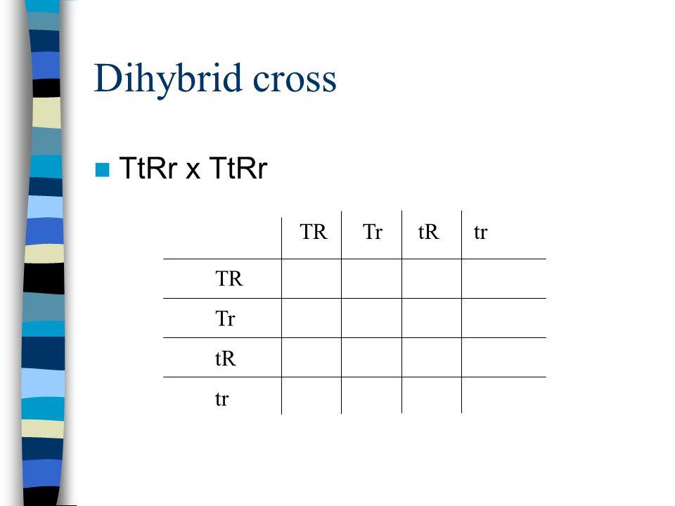 Dihybrid cross TtRr x TtRr TR Tr tR tr tRTRTr