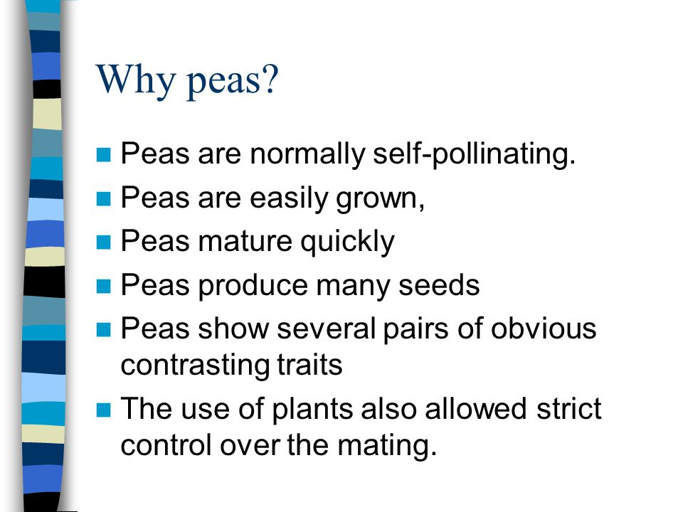 Pea's contrasting traits Tall plant vs.dwarf plant Yellow seeds vs.