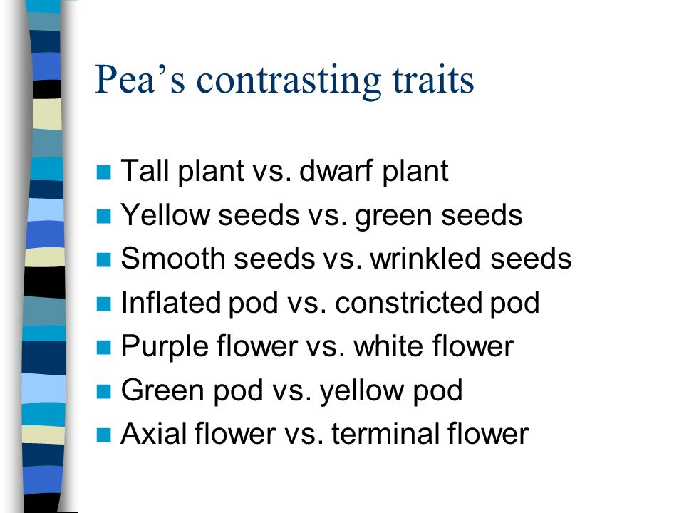 Pea's contrasting traits Tall plant vs. dwarf plant Yellow seeds vs. green seeds Smooth seeds vs. wrinkled seeds Inflated pod vs. constricted pod Purp