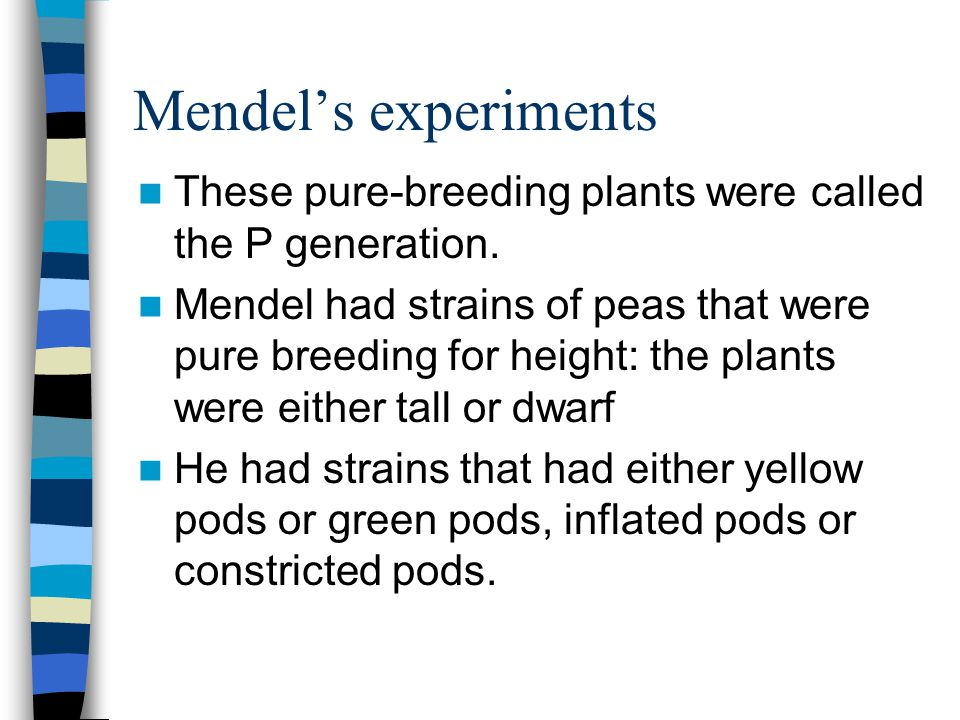 Mendel's experiments These pure-breeding plants were called the P generation. Mendel had strains of peas that were pure breeding for height: the plant