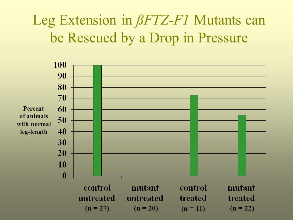 Leg Extension in ßFTZ-F1 Mutants can be Rescued by a Drop in Pressure Percent of animals with normal leg-length (n = 27)(n = 20) (n = 11) (n = 22)