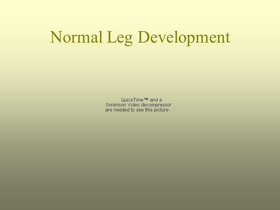 Normal Leg Development