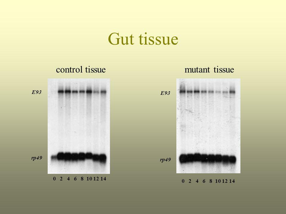 Gut tissue mutant tissuecontrol tissue E93 rp49 0 2 4 6 8 10 12 14 E93 rp49 0 2 4 6 8 10 12 14